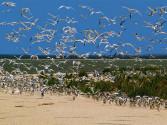 Крым-Лебяжьи-острова-много-птиц